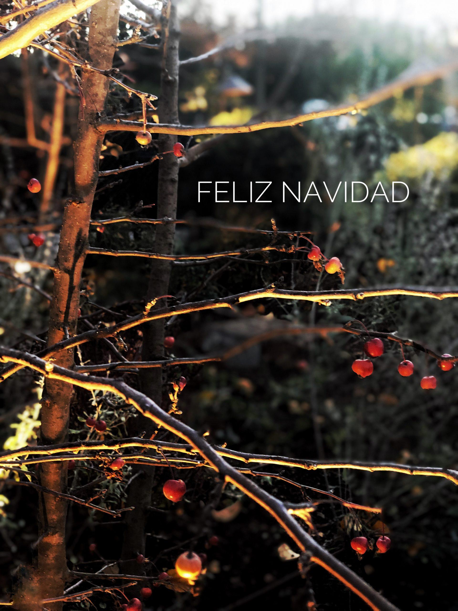 Navidad, Christmas